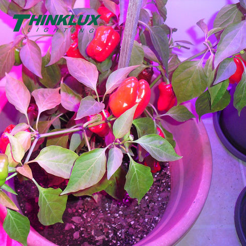 thinklux full spectrum led grow light 360 watt