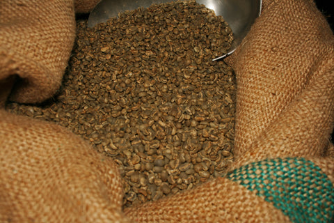 Green fair trade, organic coffee beans. Photo by Andrea Holodnick