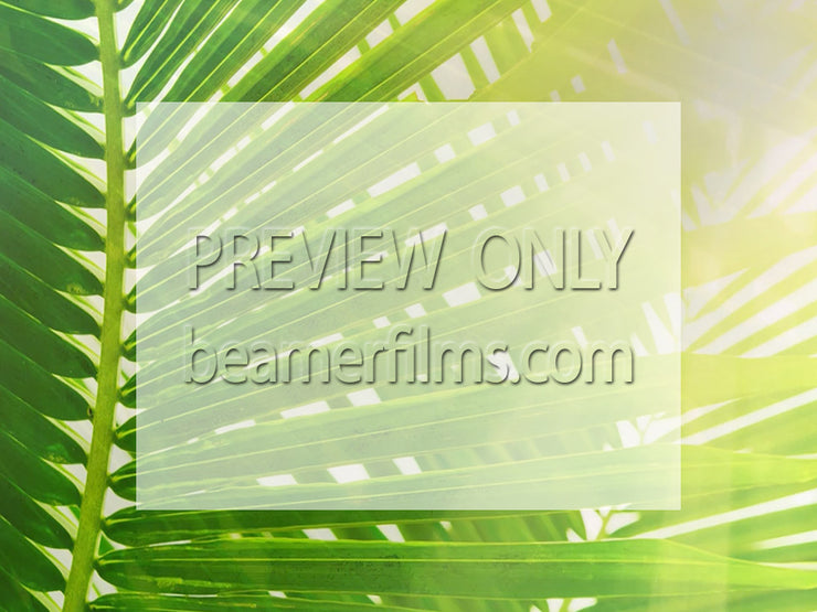 Palm Sunday Bulletin and Powerpoint Pack