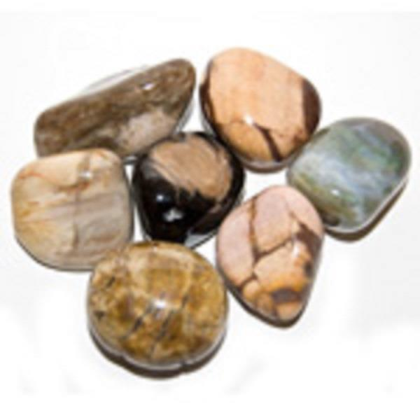 Petrified Wood Tumbled | Earthworks