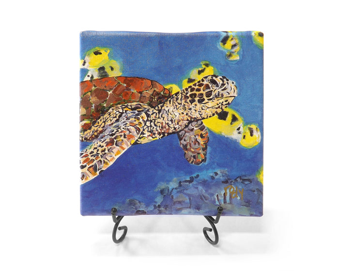 Turtle Study Mini Giclee by Kim Rody