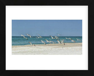 Beach Skimmers Framed Art Print -  Artist Mary Lou Johnson