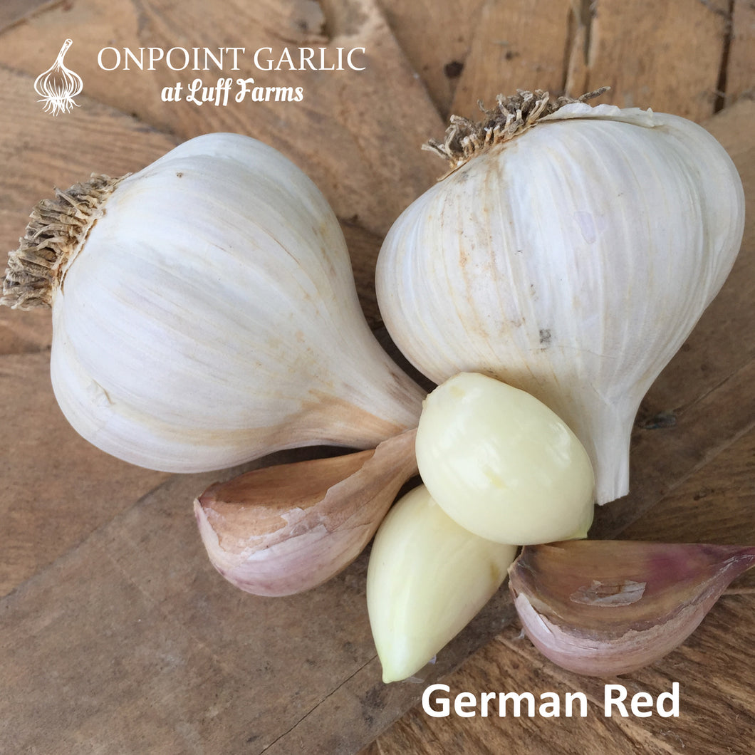German Red Gourmet Garlic