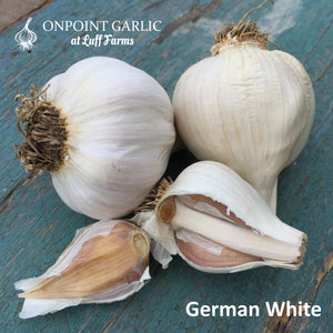 German White Gourmet Garlic