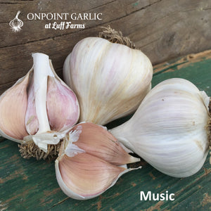 Music Gourmet Garlic