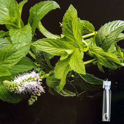 Natural essential oil peppermint