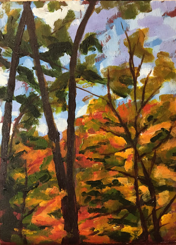Study of Autumn Tree Canopy in Wilket Creek