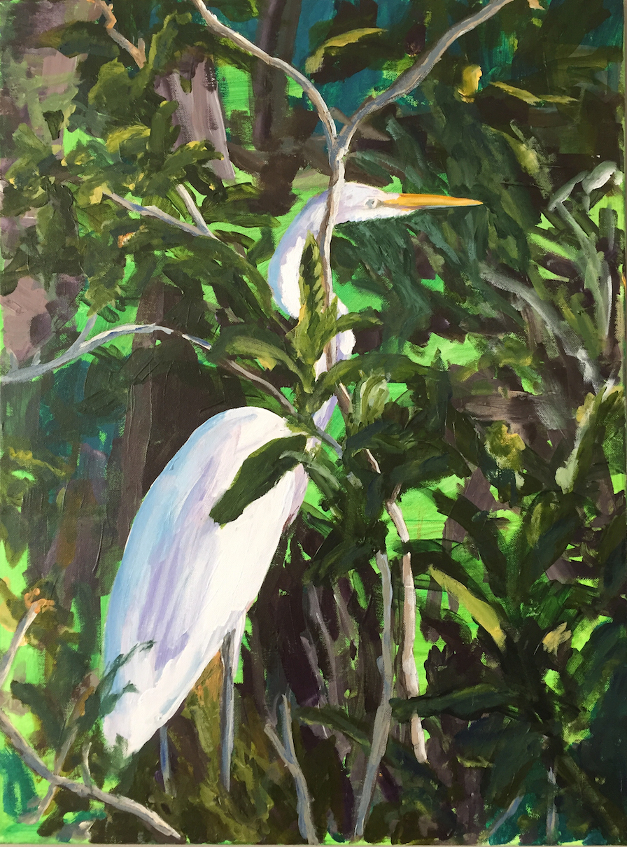 The Great Egret - Jamaica