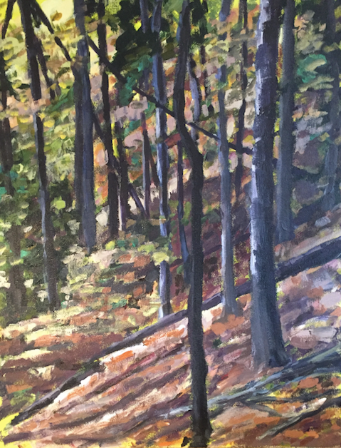 Sunnybrook Hillside Forest View