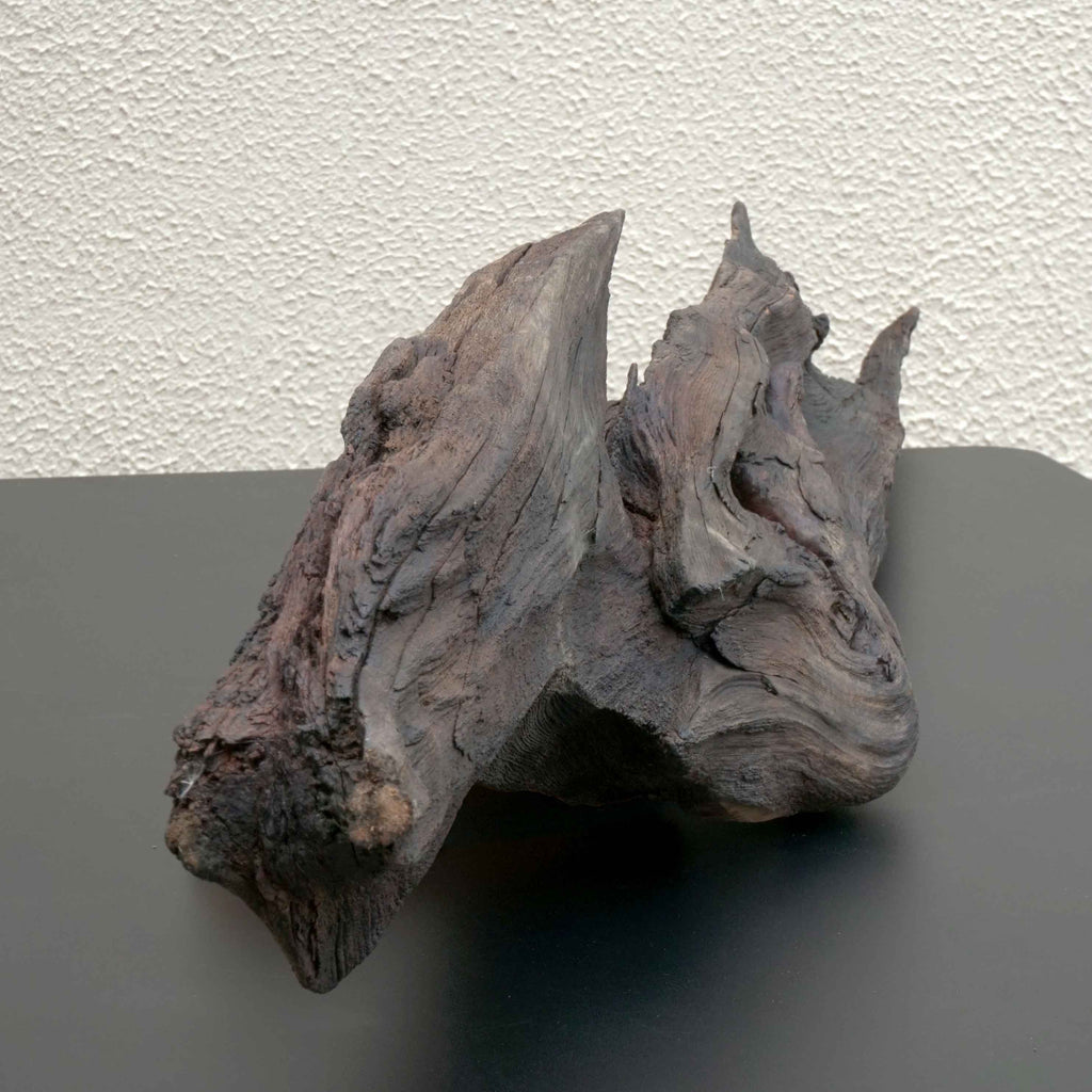Sailfin - Bog Oak Sculpture