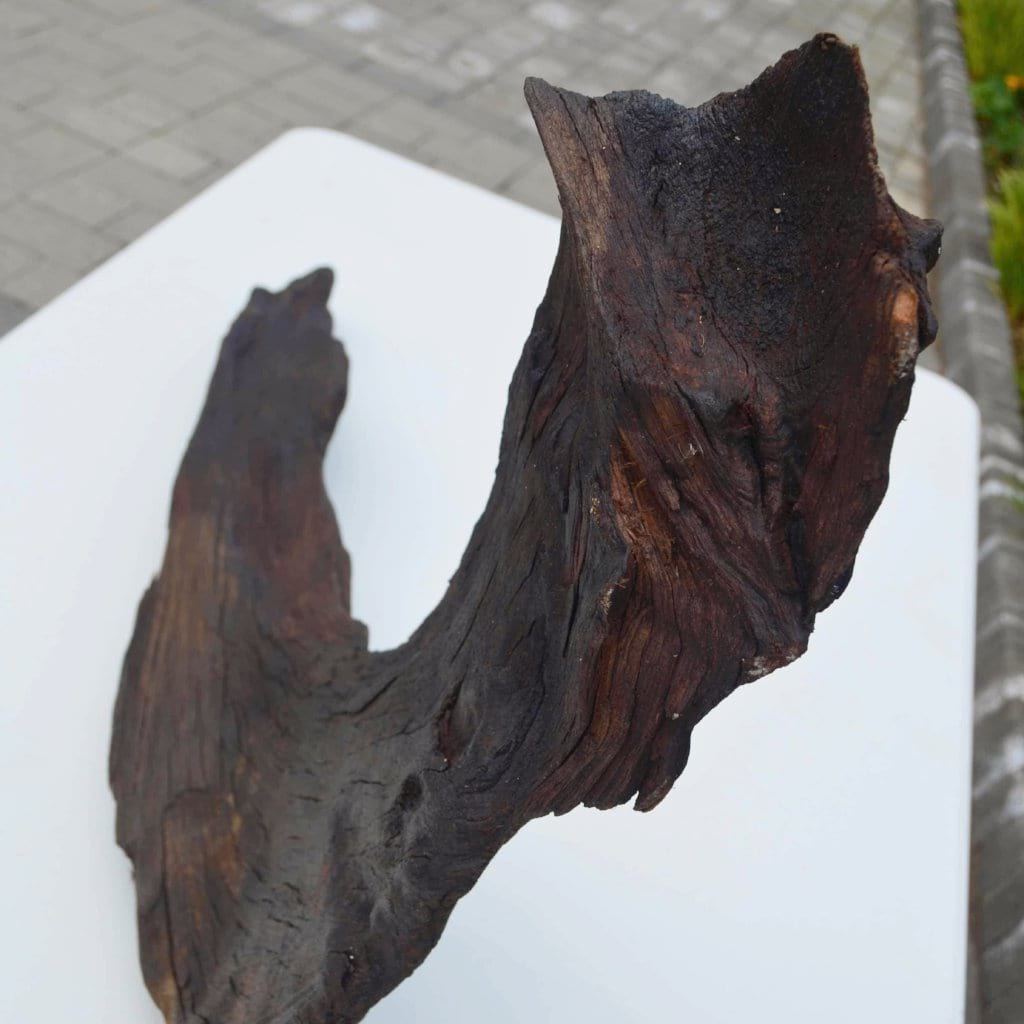 Boomerang - Bog Oak Sculpture looking down on it