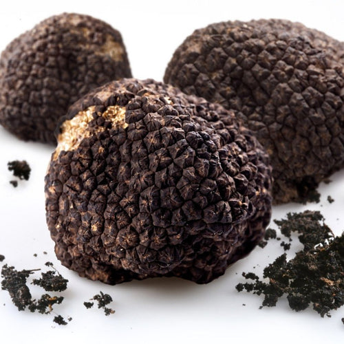 three fresh black truffle