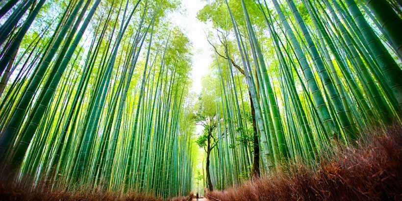 How Bamboo Can Help In Climate Change Mitigation?