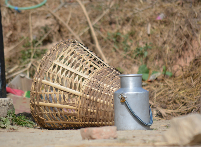 """My experience of planting bamboo in Nepal for the Grow Bamboo Initiative"" by Apsana Kafle"