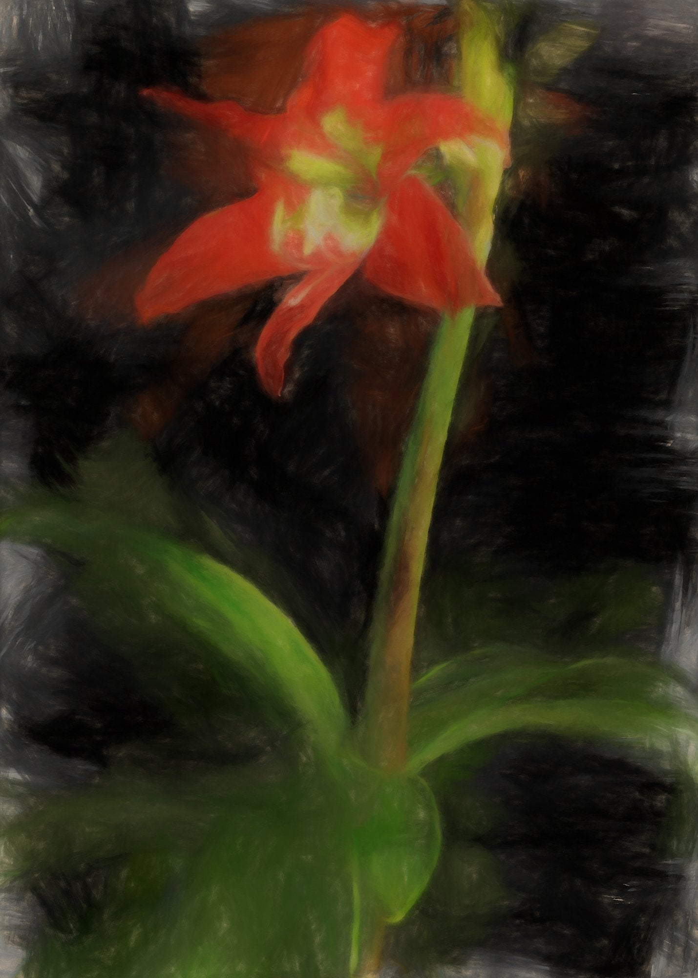 Amaryllis, Reworked, Series 2