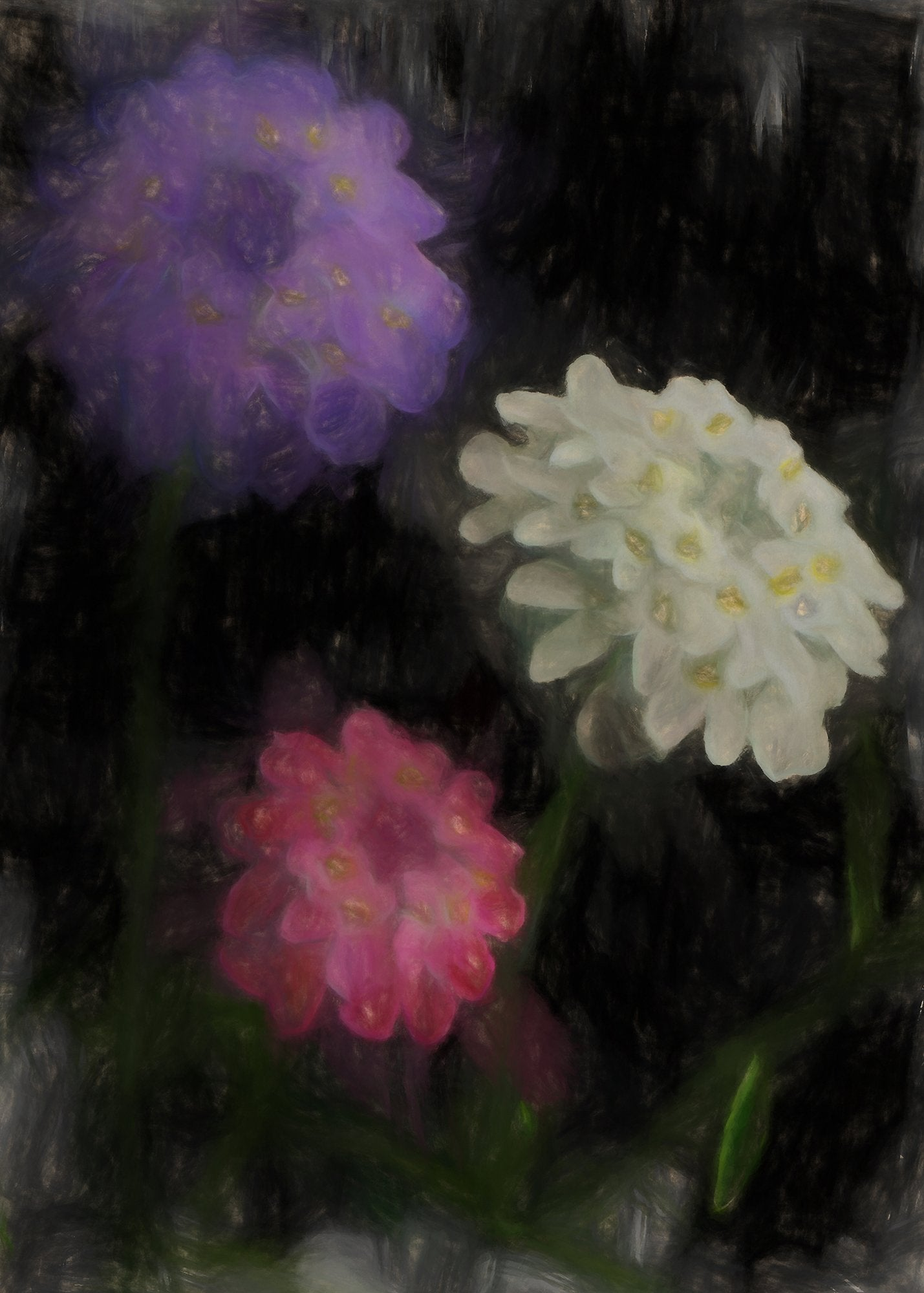 Annual Candytuft, Reworked, Series 2
