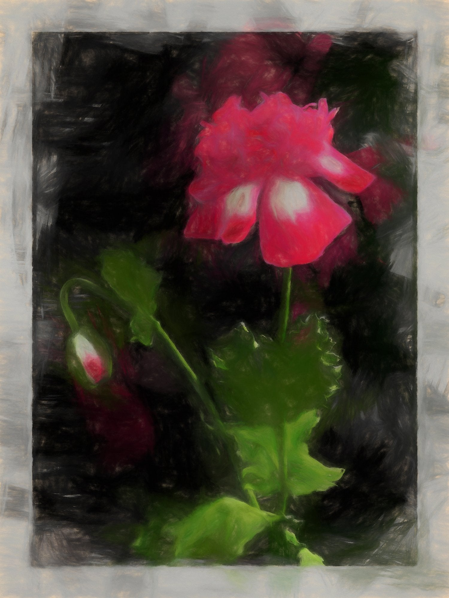 Annual Poppy, Reworked, Series 2