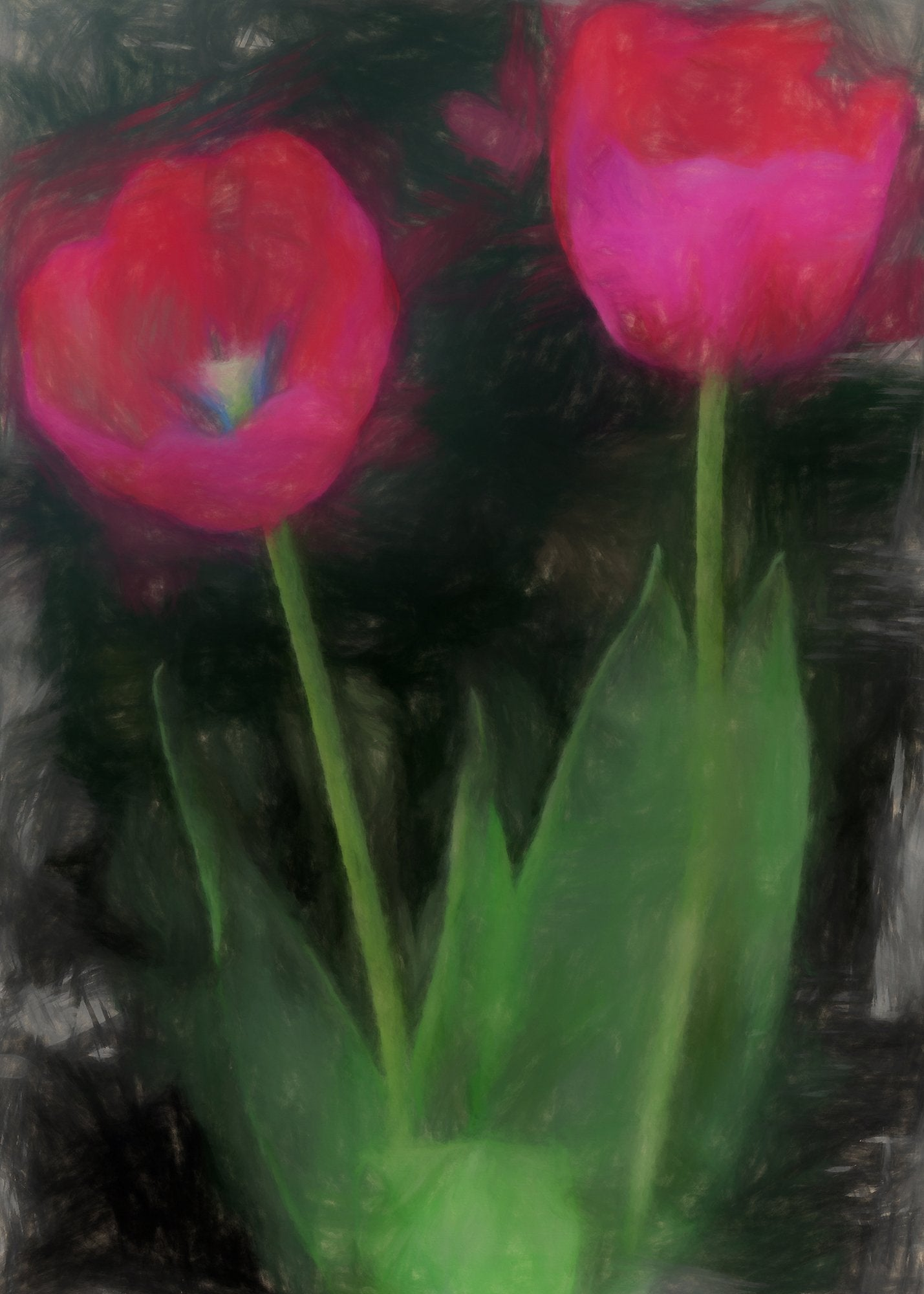 Darwin Tulip, Reworked, Series 2