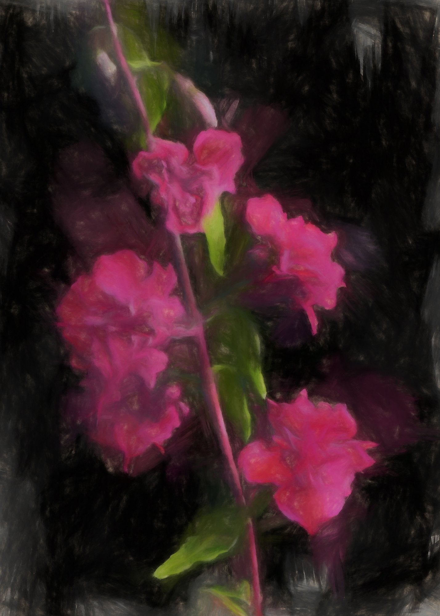 Double Clarkia, Reworked, Series 2