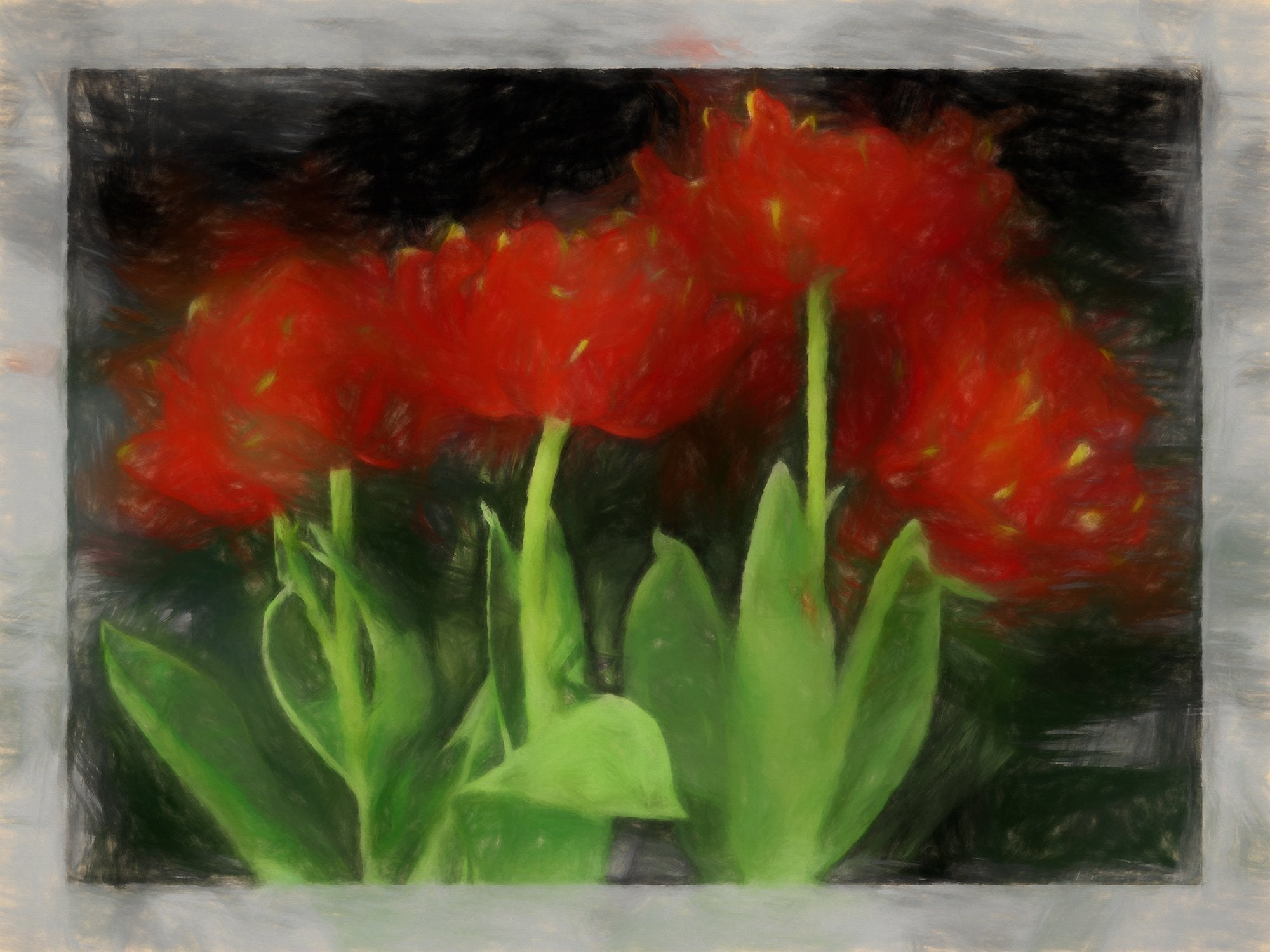 Early Double Tulip 2, Reworked, Series 2