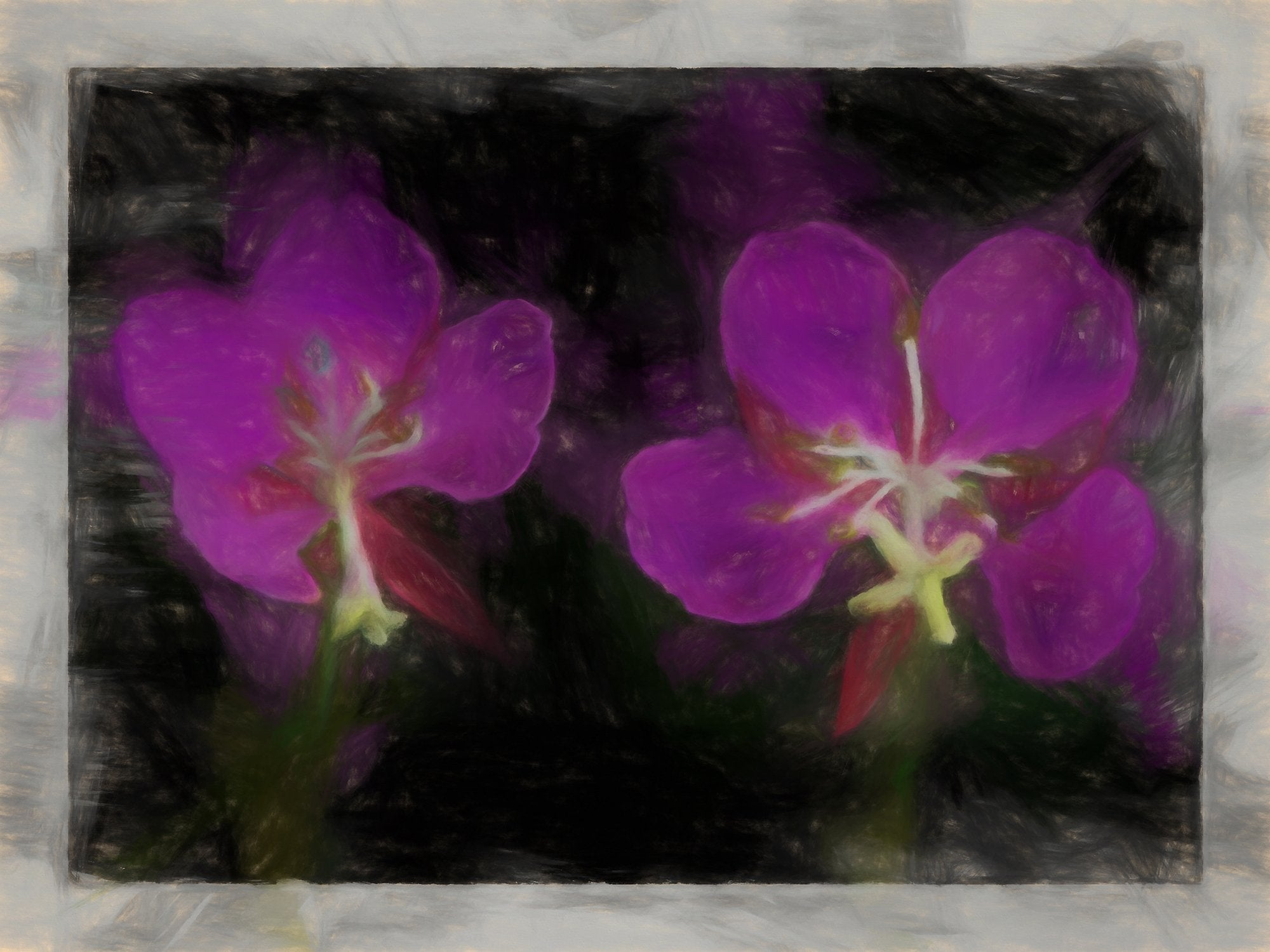 Fireweed Blossoms, Reworked, Series 2