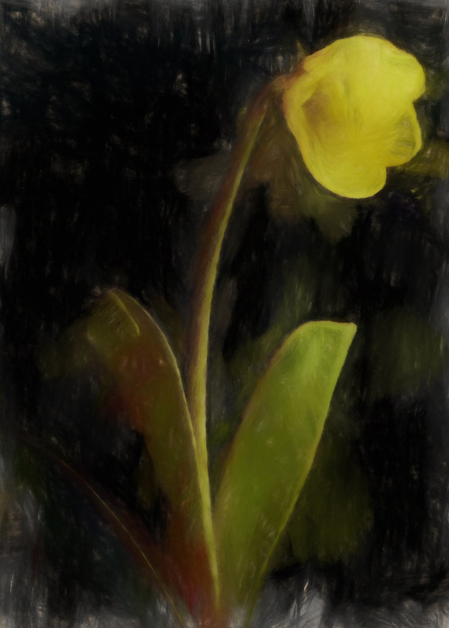 Fritillaria Pudica Spreng (Yellow or Mission Bell), Reworked, Series 2