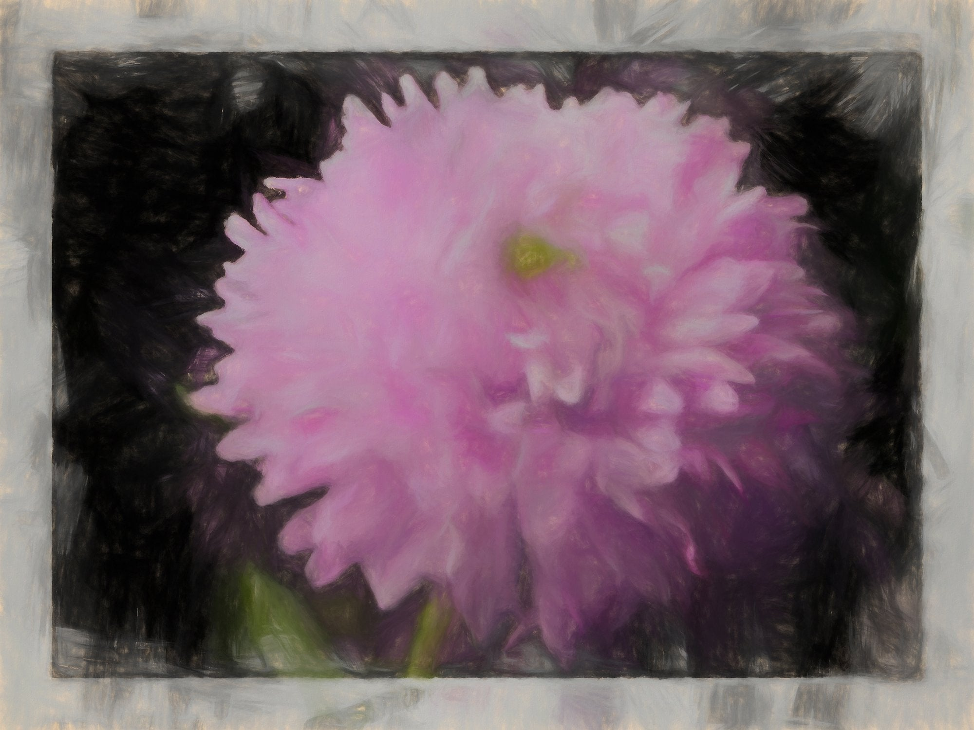 Garden Aster, Reworked, Series 2
