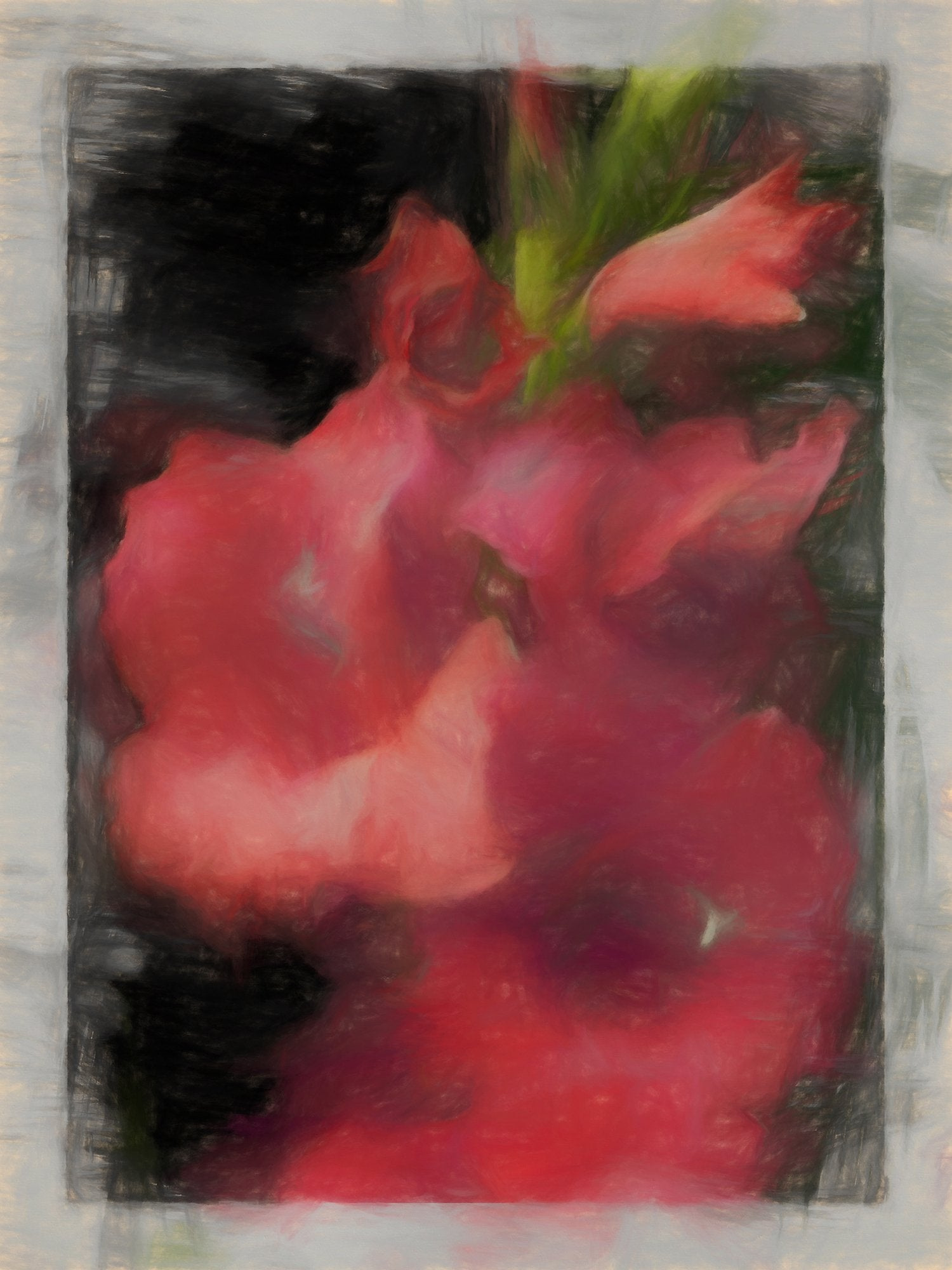 Gladiolus Picardy, Reworked, Series 2
