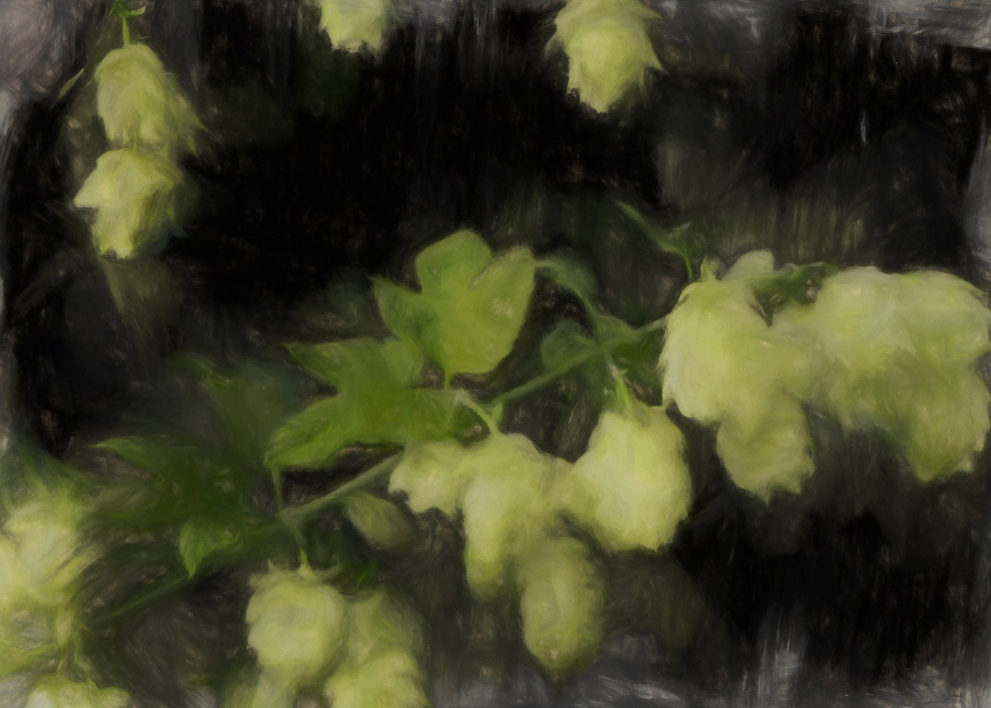 Humulus Lupulus (Hops), Reworked, Series 2