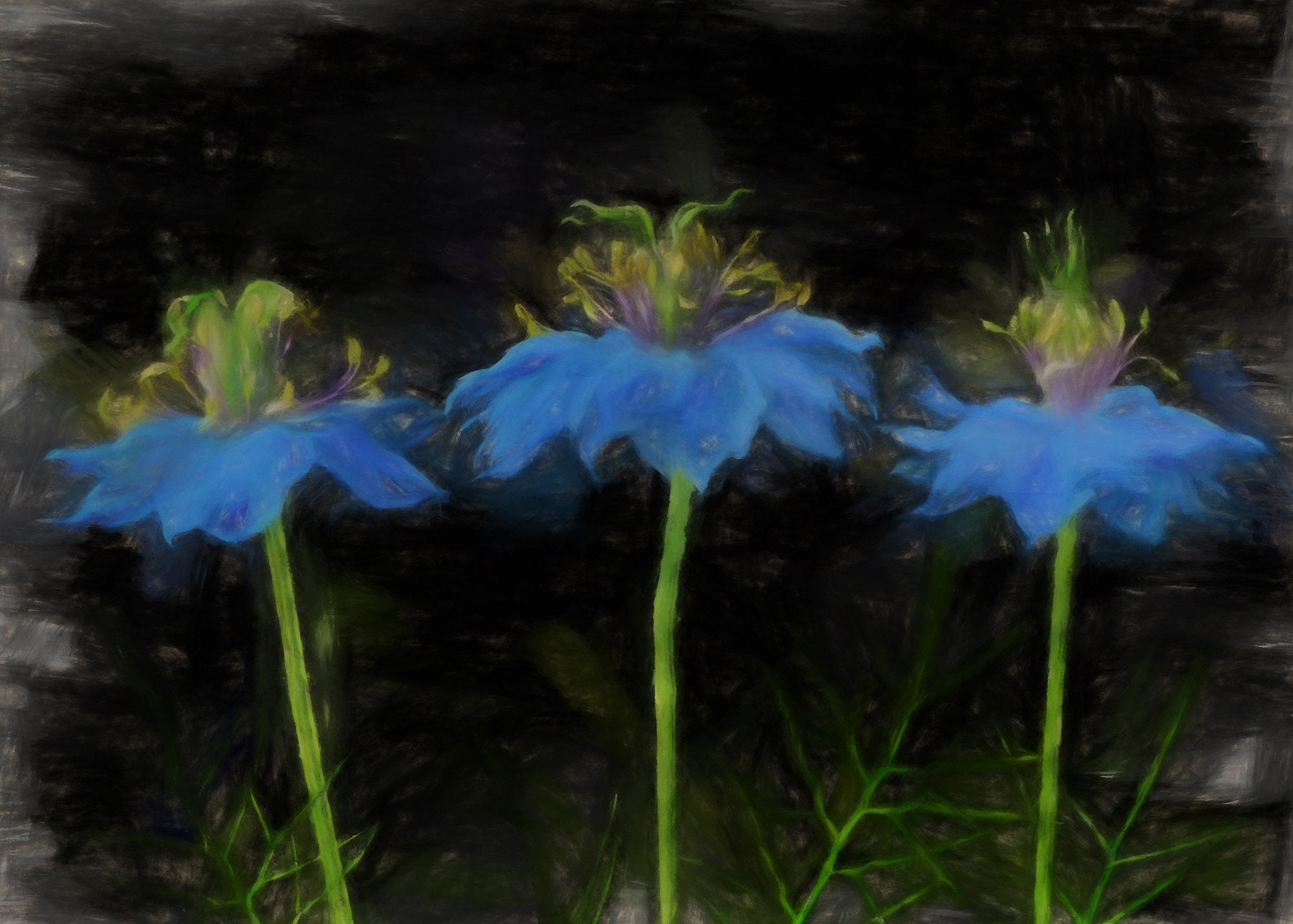 Love in a Mist, Reworked, Series 2