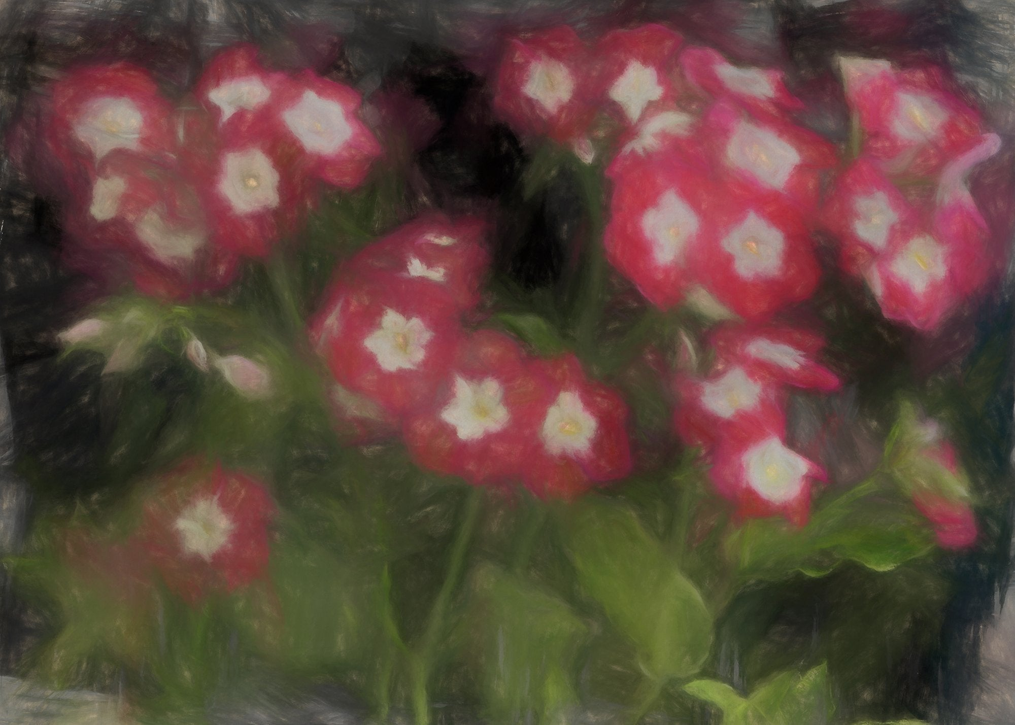 Phlox Drummondii, Reworked, Series 2