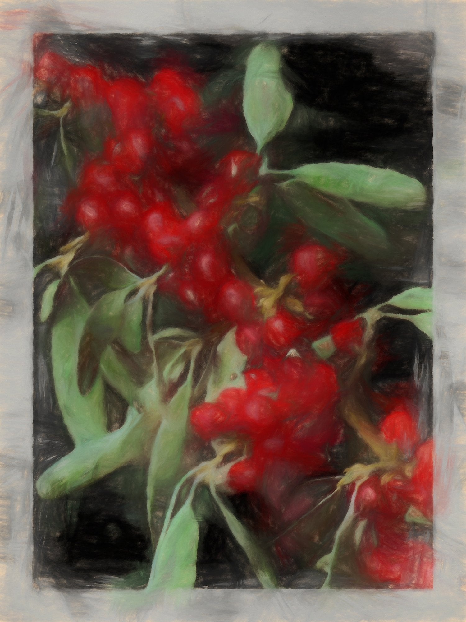 Shepherdia Argentea (Buffalo Berry), Reworked, Series 2