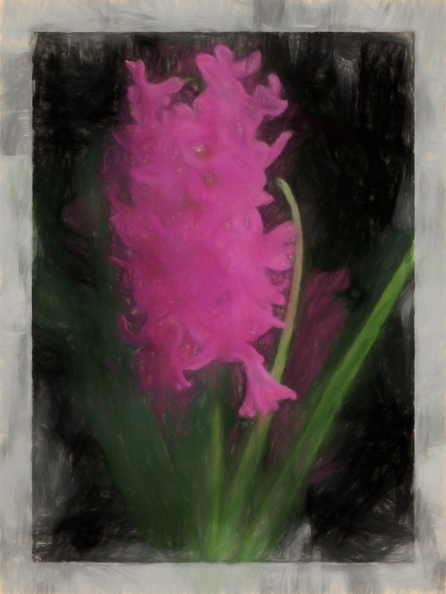 Single Dutch Hyacinth, Reworked, Series 2