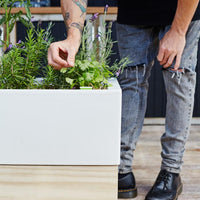 Man examining plants in self watering planter box