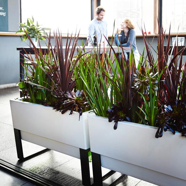 ... Two Modern Self Watering White Planter Boxes ...