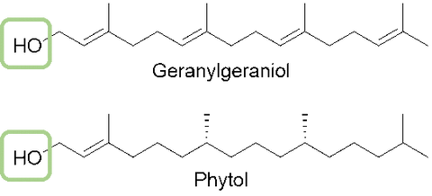 Geranylgeraniol and Phytol Chemical Structure