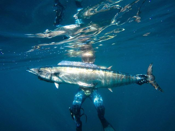 Spearfishing Charter - Punta Mita, Mexico - Offshore