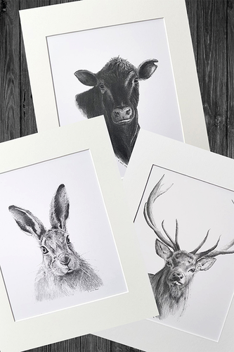 Animal Pencil Sketch Prints
