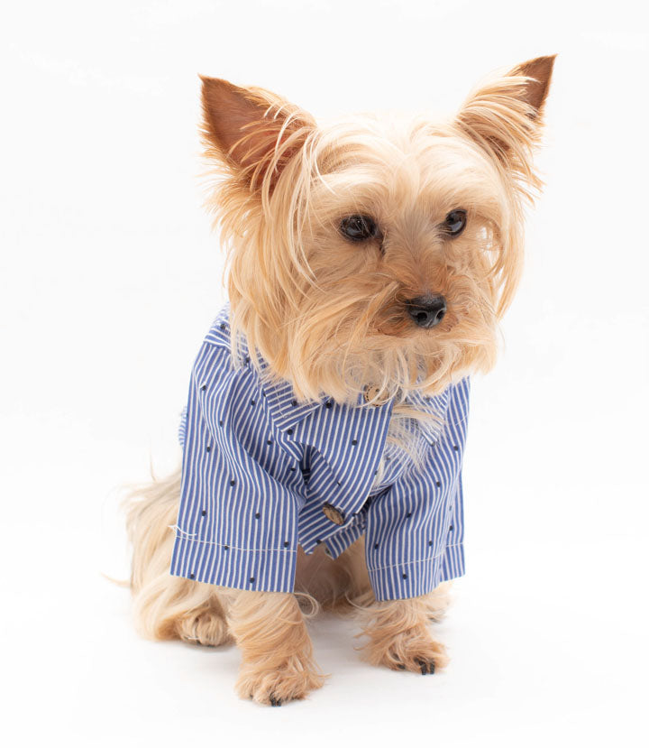 Blue polka Dot Button down Pet Shirt