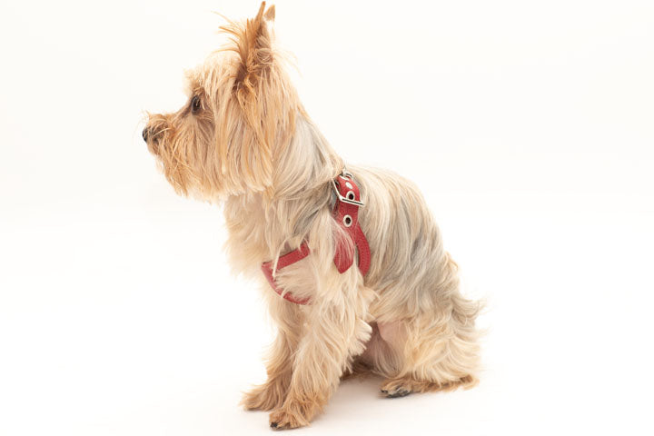 Unique Stylish comfortable Pet harness by Buddy Belts