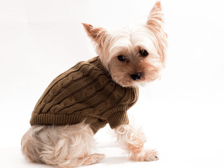Olive Green warm and cozy Pet Sweater by Doggie Design
