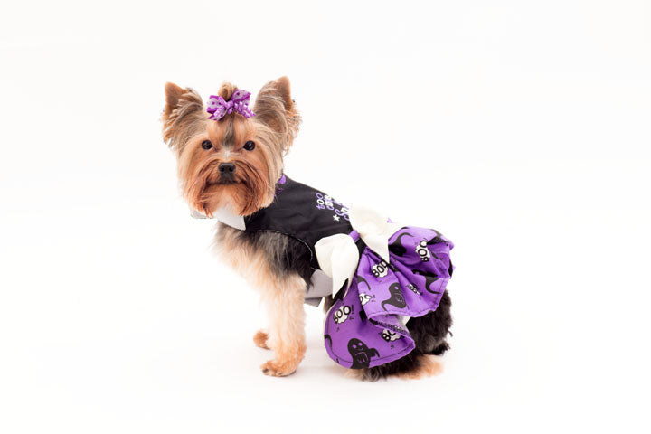 Too cute to spook- Halloween dress and harness/ leash