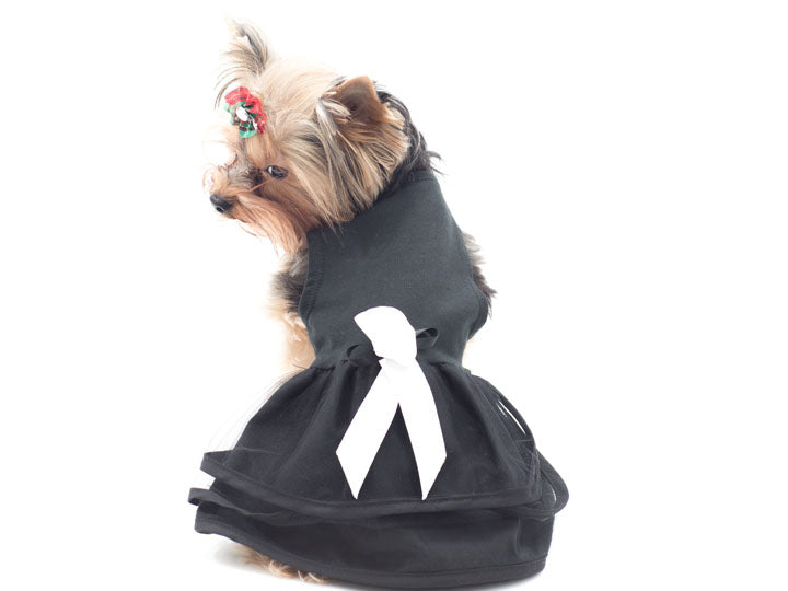 Elegant Black with White Dress with Bow By Daisy& Lucy