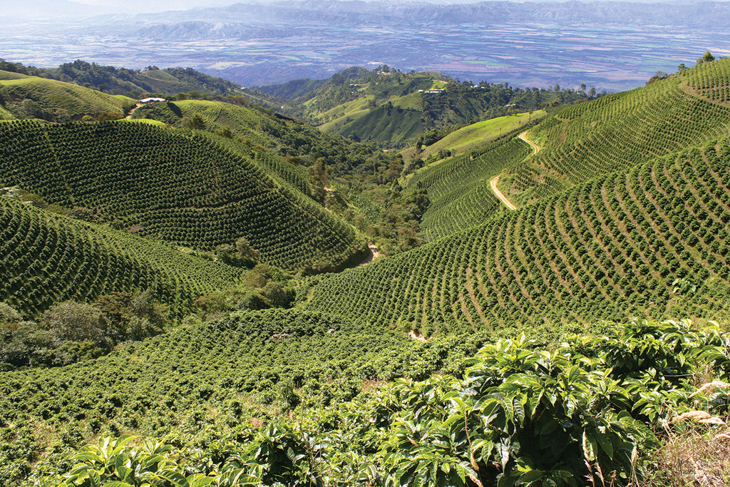 Peru: History of Coffee