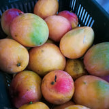 4.56 Kgs box of Mango Power from PuroSol