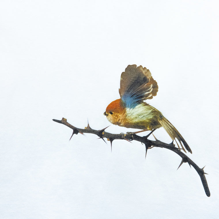 Custom T Shirt - Vinous-throated Parrotbill
