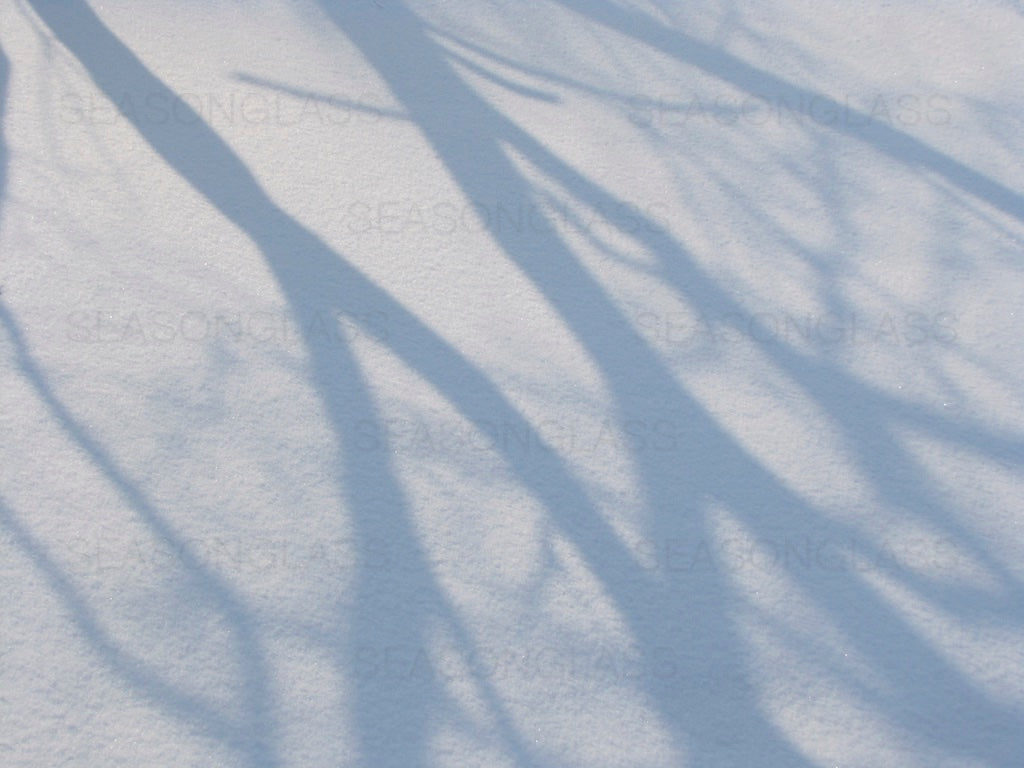 Tree Shadows on Snow