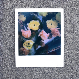 Vilis Inde Polaroid - Prickly Pear Flower
