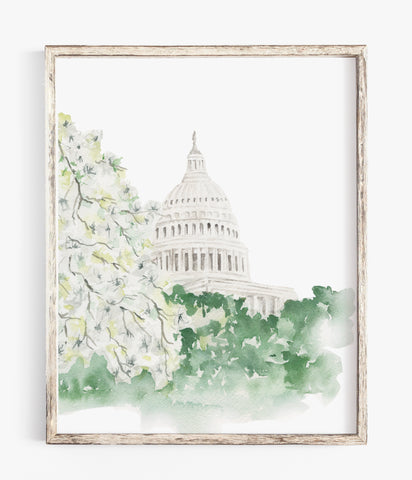 Capitol Building Dogwood Blossoms - Watercolor Print