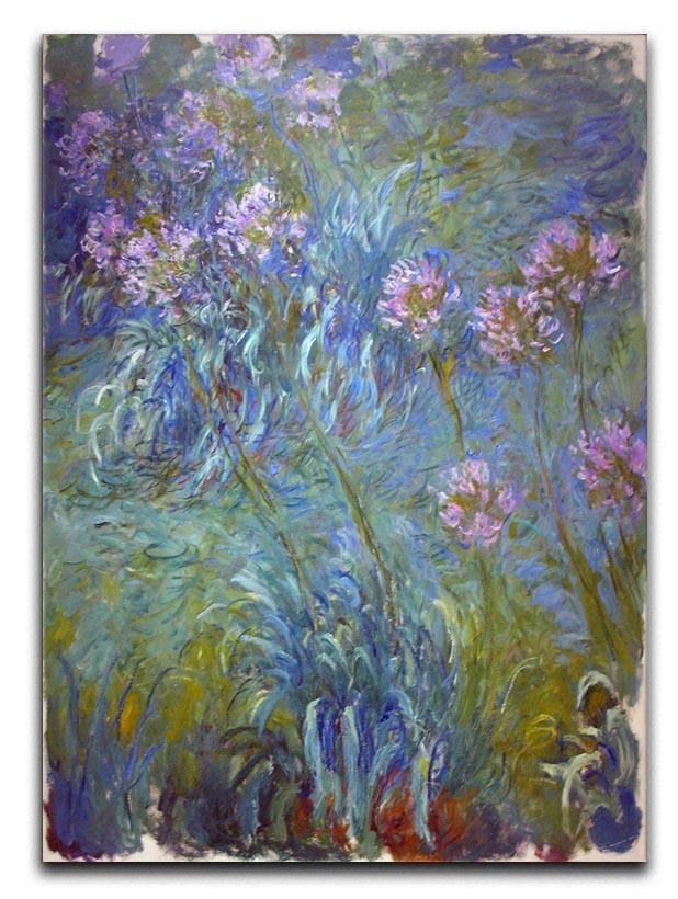 Agapanthus by Monet Canvas Print or Poster